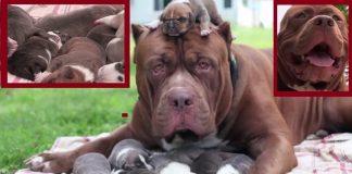 Biggest Dog