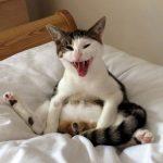 Shocked Neutered Cat