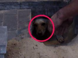 Buried Alive Dog