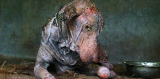 Dog with mites