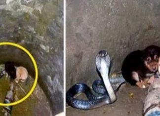 Dog Snake