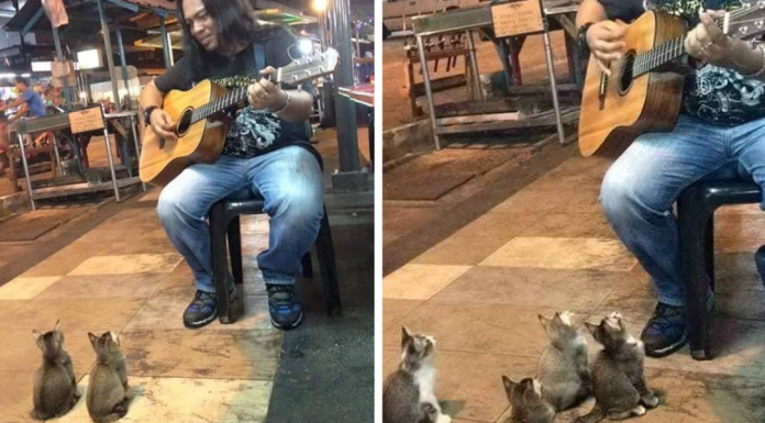 kittens-and-busker