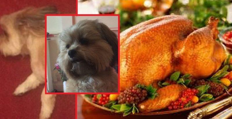 Dog Eats Christmas Turkey (1)
