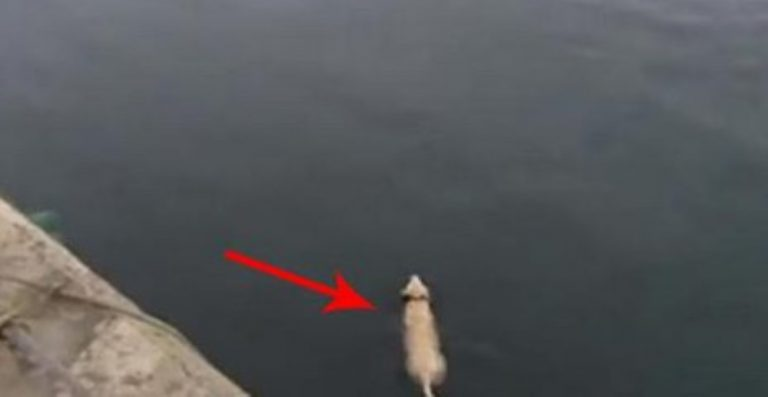 Every Day This Dog Swims Out To Play With His Friend – You'll Be STUNNED At Who It Is!