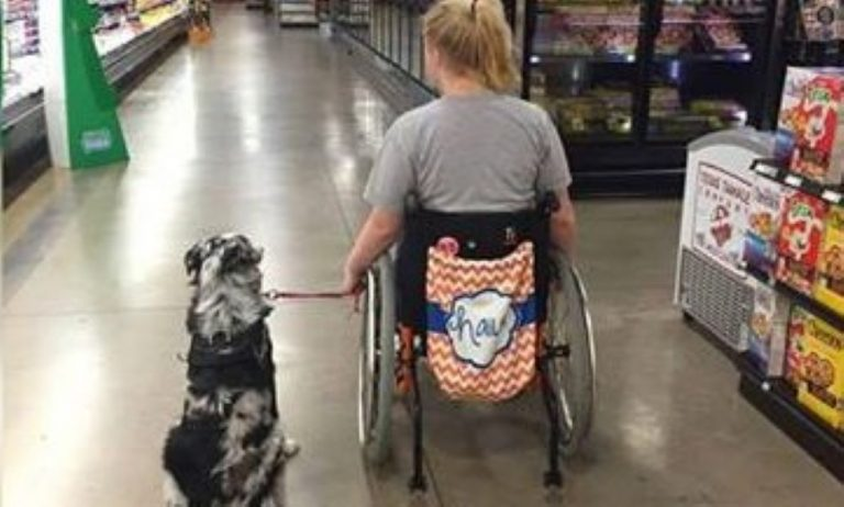 She Told A Stranger Not To Pet Her Service Dog… Why? I Can't Believe It!