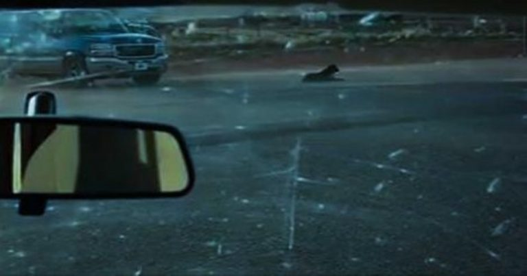 This Abandoned Dog Was Alone In a Storm Until a Heroic Guy Showed Up…