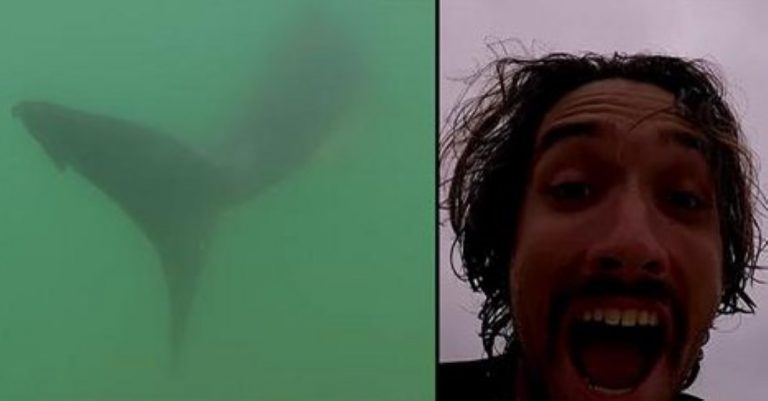 Crazy Surfer Guy Chases And Films Great White Shark On His GoPro!