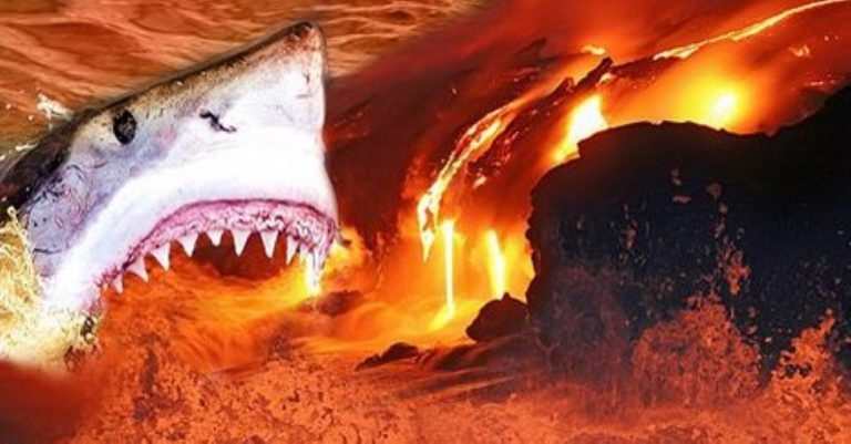 Scientists Discover Sharks Living Inside Active Volcano!