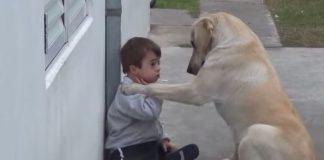 boydog