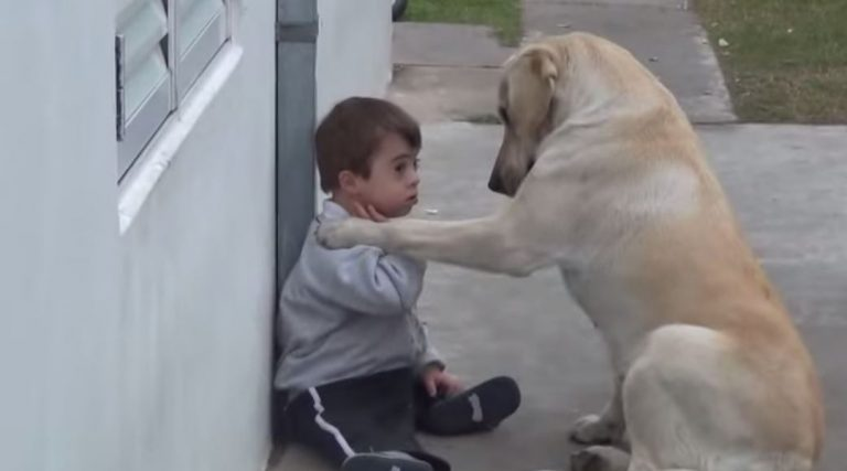 This Friendly Dog Approaches A Boy With Down Syndrome. What Happens Next Is Adorable