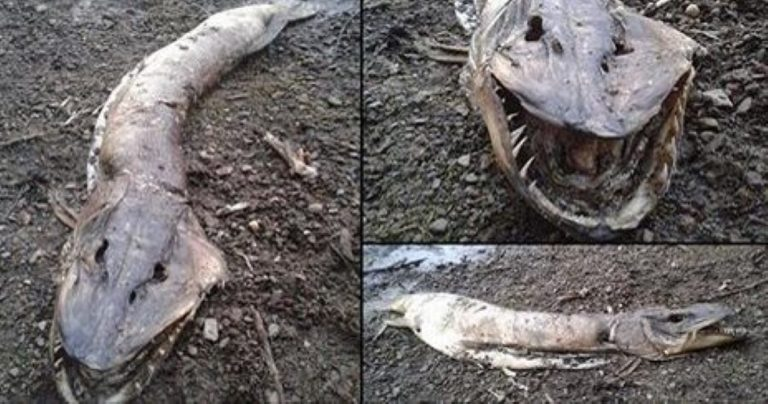 Enormous 'Lake Monster' Washes Up On Shore In Manchester, England!