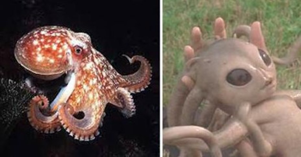 Image result for New Research Claims Octopuses Came From Space