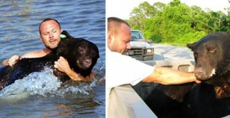 When He Saw This Black Bear In Danger, He Put Himself At Risk To Save It… What a Guy!