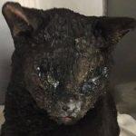 Burnt Cat