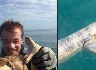 stonefish1