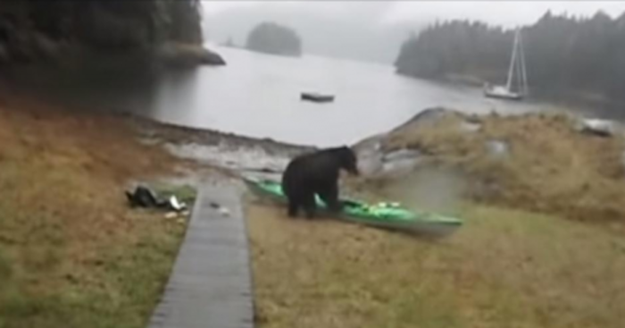 Bear Takes Revenge On Woman Who Pepper Sprayed Him!
