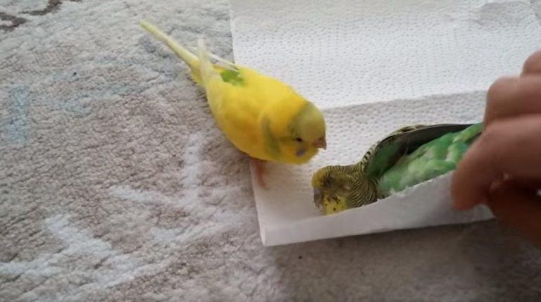 Heartbroken Little Bird Refuses To Give Up On Dead Spouse…