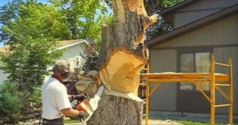 She Hired Him When Her Tree Fell… Soon? All The Neighbors Are Jealous!