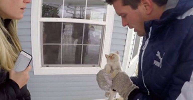 He Found A Kitten Frozen Solid In The Snow – Then Did Something INCREDIBLE!