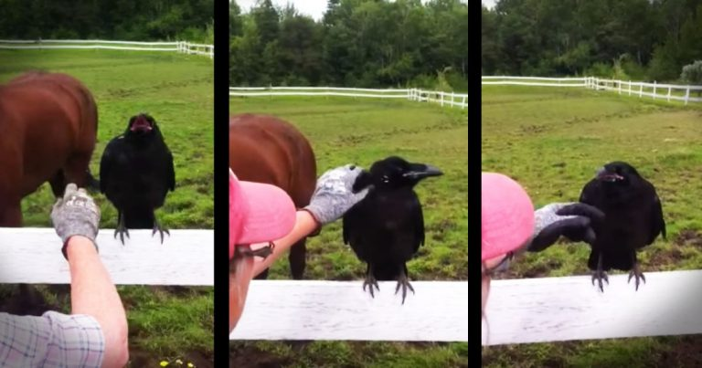 A Raven Paid Them a Visit… When They Realized Why? They Just HAD To Do Something