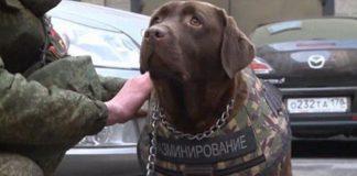 bombdog