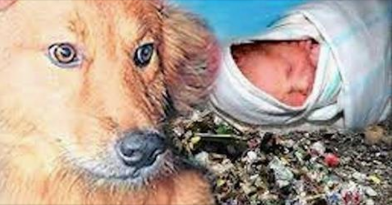 A Baby Is Left To Die In A Trash Heap… Until This Dog Does Something INCREDIBLE!