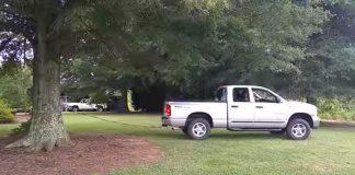 trucktree
