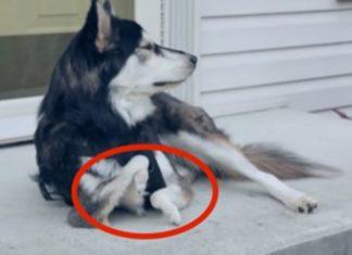 3D Printed Dog Legs