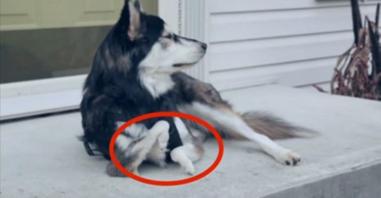 This Dog Was Born With Deformed Legs… What They Do For Him Made Me Cry!