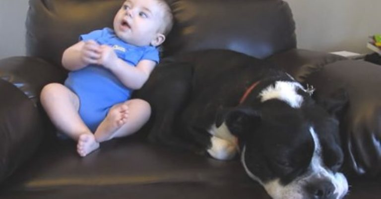 When This Little Baby Poops His Pants Watch The Dog's HILARIOUS Reaction!