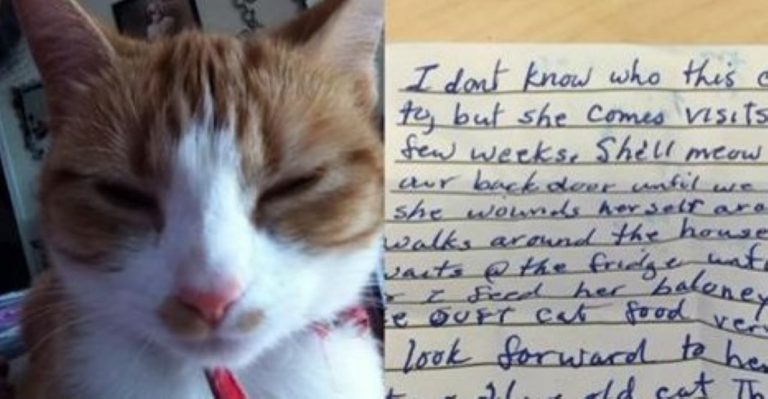 This Cat Brought Home A Note Revealing A SHOCKING Secret!