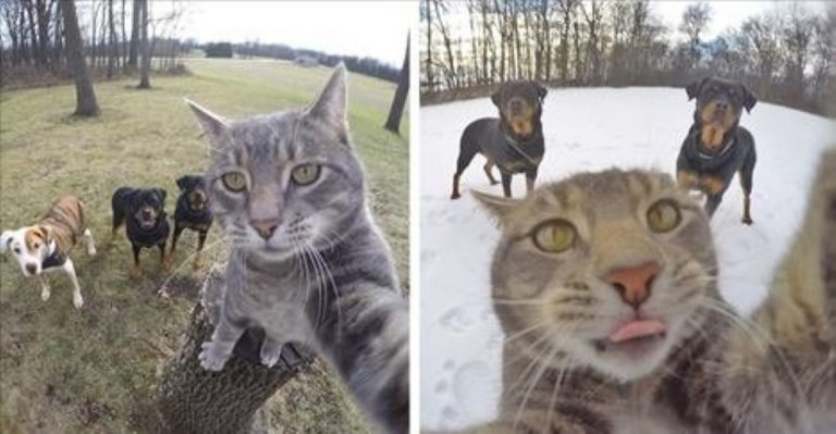 Meet The Cat Who's Learned To Take Selfies… And They're Ridiculously Good!