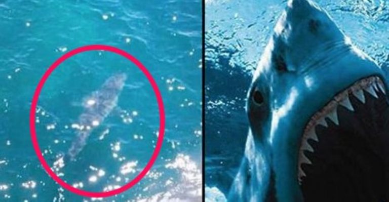 7 METER Great White Shark 'As Big As Jaws' Spotted!