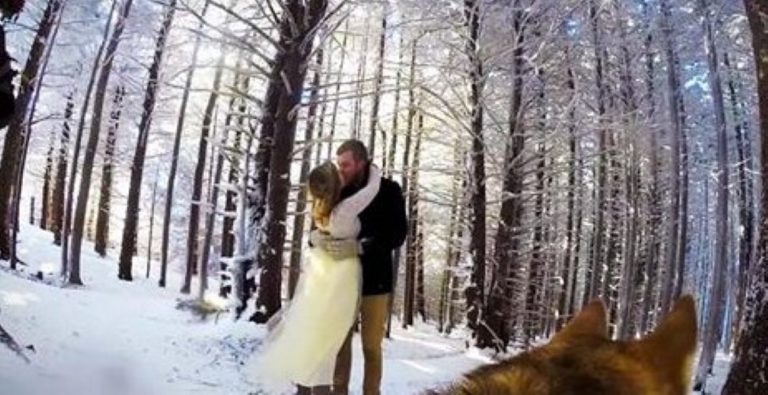 WATCH: Couple Get Their Dog To Film Their Wedding – The Results? INCREDIBLE!