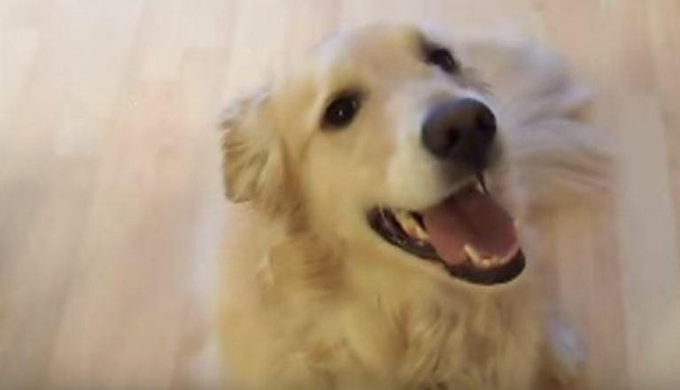 He Tells His Dog To 'Clean The House'… What She Does Next? WOW!