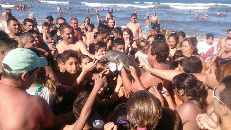 This Baby Dolphin Died Because Tourists Passed It Round Taking Selfies With It