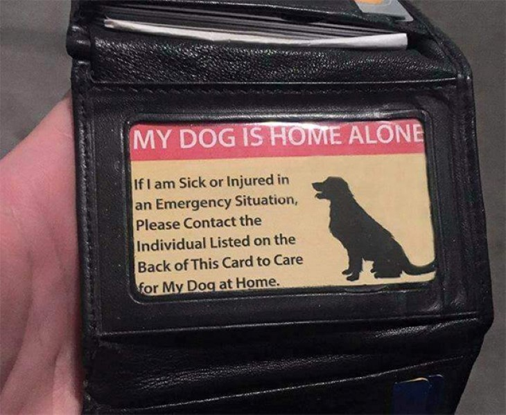 Own A Pet? Then You NEED One Of These…
