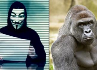 Harambe Anonymous Thumb
