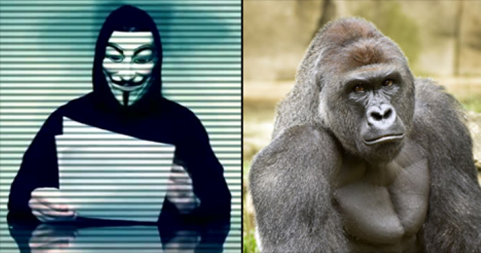 Anonymous Declare War On Family Of Boy Who Fell Into The Gorilla Enclosure