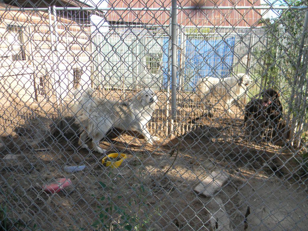 animal abuse 1