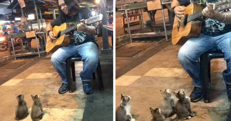 WOW! This Busker Street Musician Was About To Quit 'til These Little Guys Showed Up!