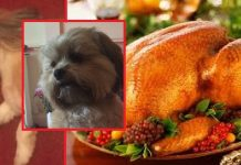 Dog Eats Christmas Turkey (1)