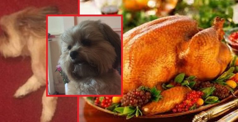​Dog Eats Family's Christmas Turkey Dinner Before They Get A Chance