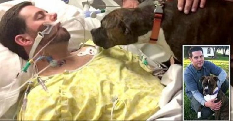 The Heart-Breaking Moment This Dog Had To Say Goodbye To Her Dying Human