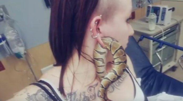 Snake in Ear